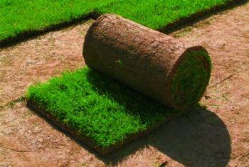 d318b6af4e Rovnaká kvalita sa pri trávnikoch zakladaných výsevom dosahuje po  niekoľkých týždňoch až mesiacoch. Cena ukladaných trávnikov býva zhruba  dvojnásobná ako ...